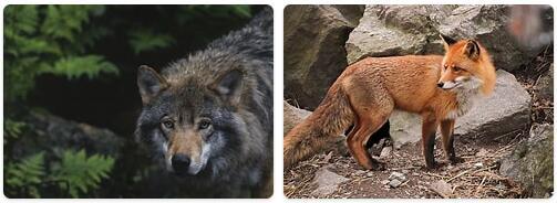 Sweden Native Animals