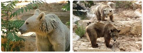 Syria Native Animals