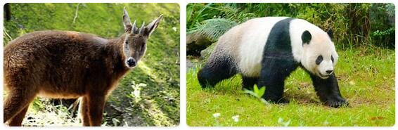 Taiwan Native Animals