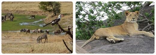 Tanzania Native Animals