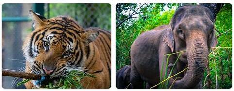 Thailand Native Animals