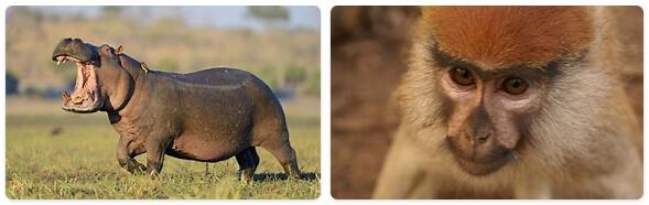 Togo Native Animals