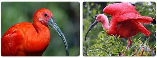 Trinidad and Tobago Native Animals