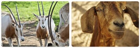 Tunisia Native Animals