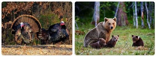 Turkey Native Animals