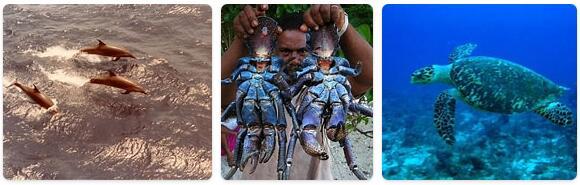 Tuvalu Native Animals