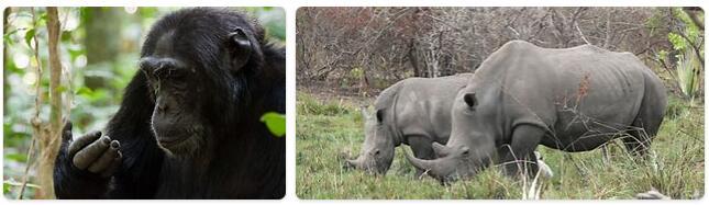 Uganda Native Animals
