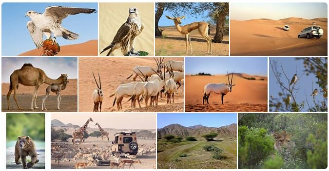 United Arab Emirates Native Animals