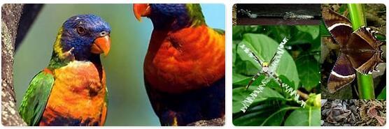 Vanuatu Native Animals