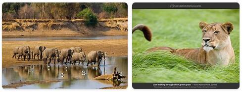 Zambia Native Animals