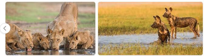 Zimbabwe Native Animals
